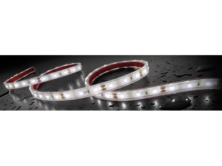 Staudte Hirsch 570029 SH 5.610 12 V LED strip 12 V LED (l x b x h) 1 m x 12 mm x 5 mm