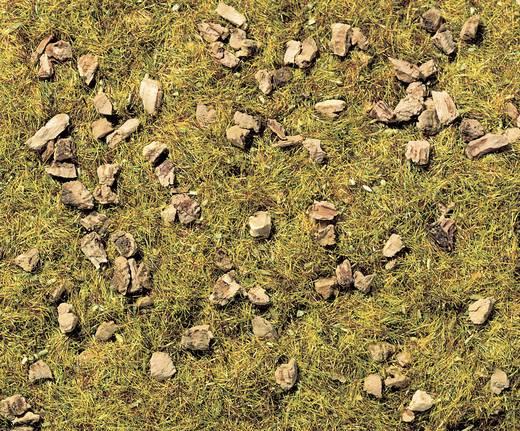 NOCH 8360 Strooigras Stenige bergweide Groen (gemiddeld)