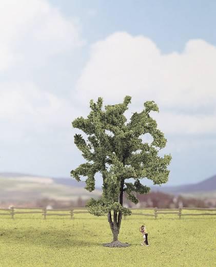 NOCH 25850 Acacia Hoogte:150 mm