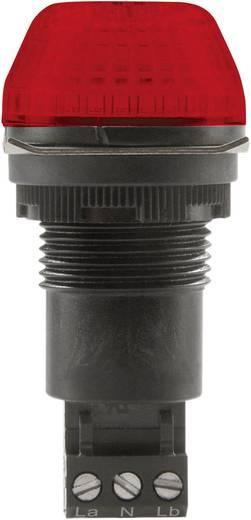 Auer Signalgeräte IBS Signaallamp LED Rood Rood Continu licht, Knipperlicht 24 V/DC, 24 V/AC