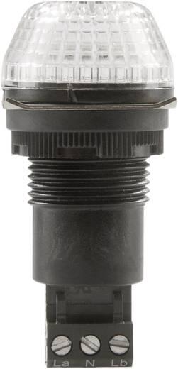 Auer Signalgeräte IBS Signaallamp LED Helder Helder Continu licht, Knipperlicht 230 V/AC