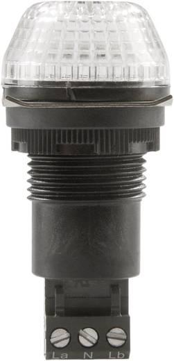 Auer Signalgeräte IBS Signaallamp LED Helder Helder Continu licht, Knipperlicht 24 V/DC, 24 V/AC