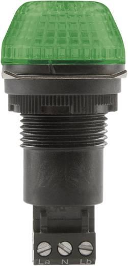 Auer Signalgeräte IBS Signaallamp LED Groen Groen Continu licht, Knipperlicht 12 V/DC, 12 V/AC
