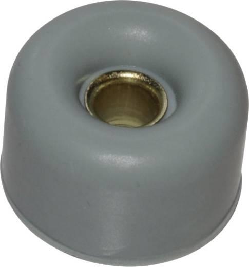 ZB8C Apparaatvoet Verschroefbaar, Rond Lichtgrijs (Ø x h) 30 mm x 17.5 mm 1 stuks