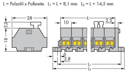 Klemstrook 10 mm Veerklem Toewijzing: L Grijs WAGO 261-205/332-000 100 stuks