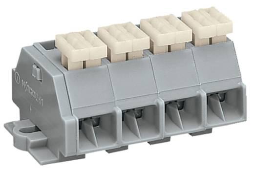 Klemstrook 10 mm Veerklem Toewijzing: L Grijs WAGO 261-204/332-000 100 stuks