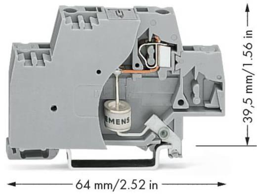 Aderklem 10 mm Veerklem Toewijzing: L Grijs WAGO 280-503/281-579 50 stuks
