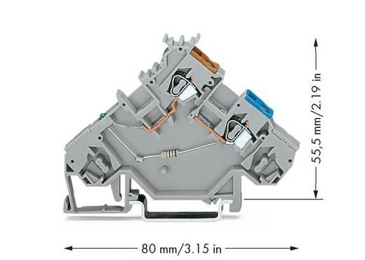 Initiatorklemmen 5 mm Veerklem Toewijzing: L Grijs WAGO 280-564/281-483 10 stuks