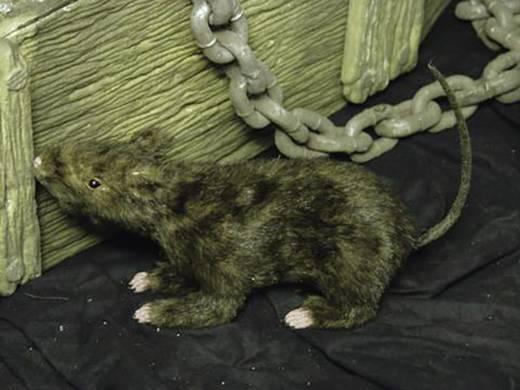 Rat, levensecht met vacht Grijs, Bruin