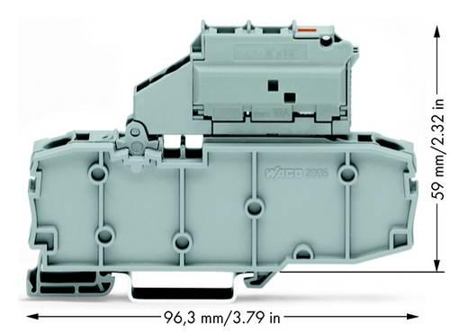 Zekeringsklem 7.50 mm Veerklem Grijs WAGO 2006-1631/1099-541 25 stuks