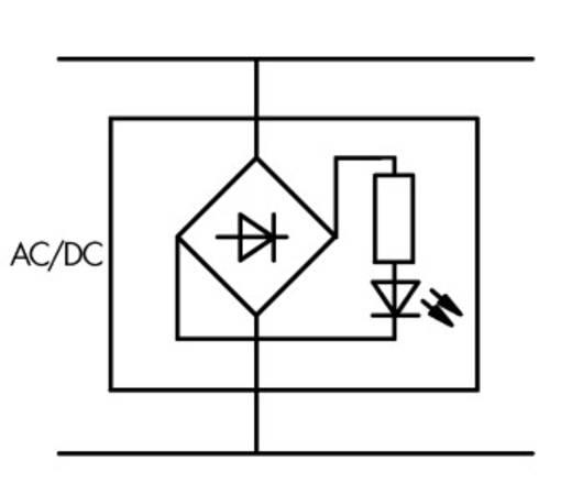 WAGO 2002-880/1000-541 LED-bouwsteen 50 stuks