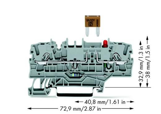 Zekeringsklem 5.20 mm Veerklem Grijs WAGO 2002-1981/1000-413 50 stuks