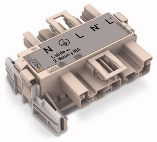 WAGO 770-7505 Netvoeding Netstekker - Netbus Totaal aantal polen: 5 Donkergrijs 20 stuks