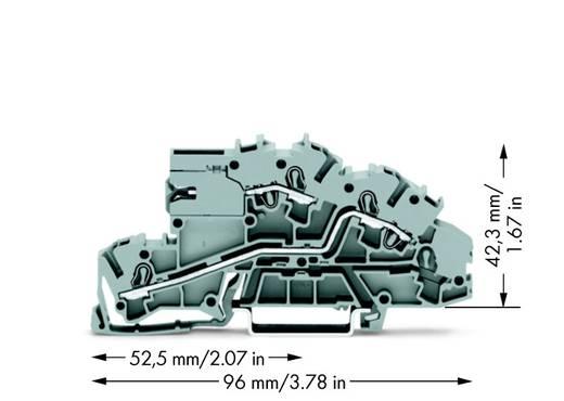 Installatie-etageklem 5.20 mm Veerklem Toewijzing: LT, L Grijs WAGO 2003-7659 50 stuks