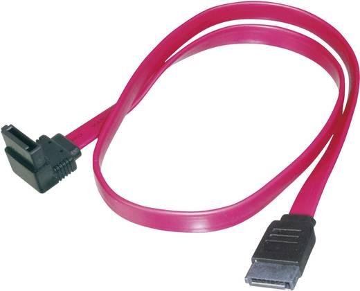 Harde schijf Kabel [1x SATA-bus 7-polig - 1x SATA-bus 7-polig] 0.50 m Rood Digitus