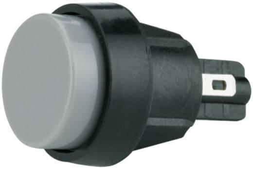Marquardt 5000.0101 Druktoets 250 V/AC 4 A 1x uit/(aan) IP40 schakelend 1 stuks
