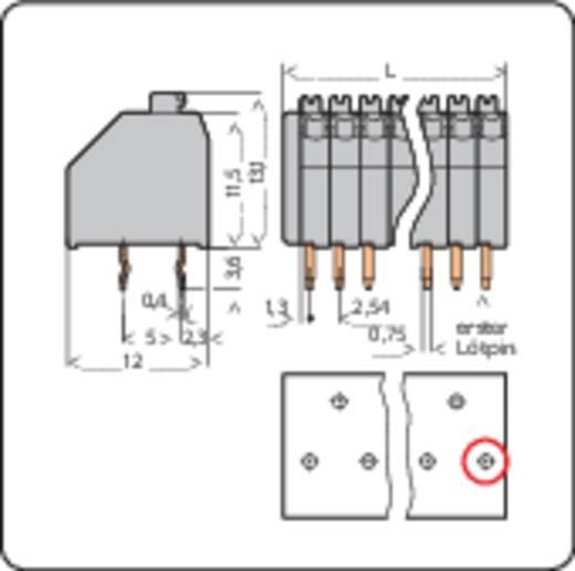 Veerkachtklemblok 0.50 mm² Aantal polen 2 WAGO Grijs 1 stuks