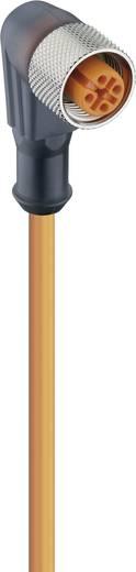 Lumberg Automation RKWT 4-3-06/5 M Schakelaarsensoraansluitkabel, M12-stekker, recht Aantal polen: 3 Inhoud: 1 stuks