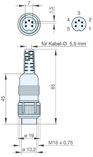 Hirschmann MAS 3100 DIN-connector Stekker, recht Aantal polen: 3 Grijs 1 stuks