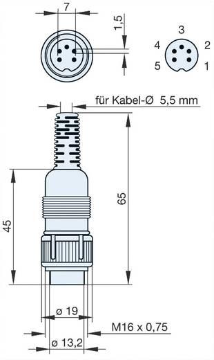 Hirschmann MAS 5100 DIN-connector Stekker, recht Aantal polen: 5 Grijs 1 stuks