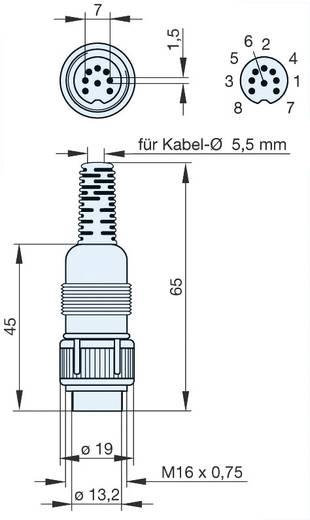 Hirschmann MAS 8100S DIN-connector Stekker, recht Aantal polen: 8 Grijs 1 stuks