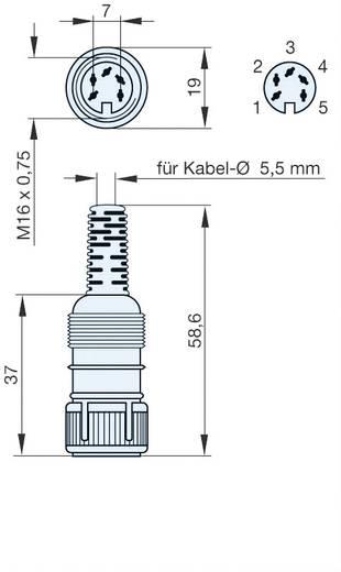 Hirschmann MAK 5100 DIN-connector Bus, recht Aantal polen: 5 Grijs 1 stuks
