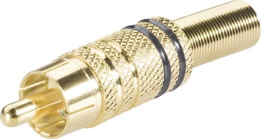 BKL Electronic 101006 Cinch-connector Stekker, recht Aantal polen: 2 Zwart 1 stuks