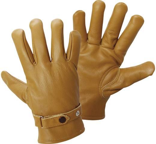 Griffy 1607 Officiershandschoen nappa-chauffeurshandschoen Bovenmateriaal: nappaleer Maat (handschoen): 9, L