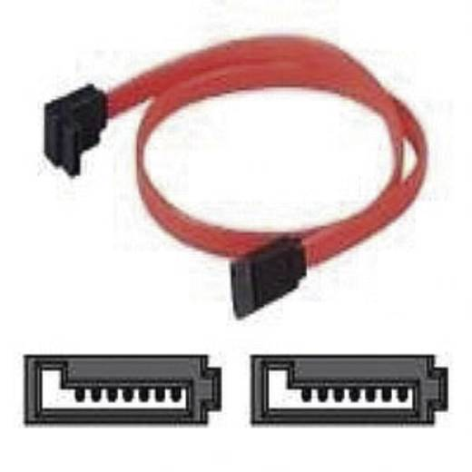 Harde schijf Kabel [1x SATA-bus 7-polig - 1x SATA-bus 7-polig] 0.60 m Rood Belkin