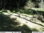Infračervená kamera pre voľne žijúce zvieratá od spoločnosti Berger & Schröter 16-megapixelová digitálna fotografia