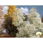 Silhouette 200-15 S grm pomlad , cvetenje 55 mm