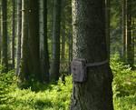 Infrardeča kamera za snemanje divjih živali, 12 mio. točk