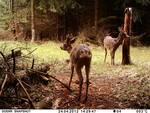 DÖRR fotoaparat za divje živali SnapShot Mini Black 12MP