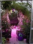 LED-lampa växter tillväxt