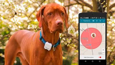 Hund mit GPS Tracker am Halsband
