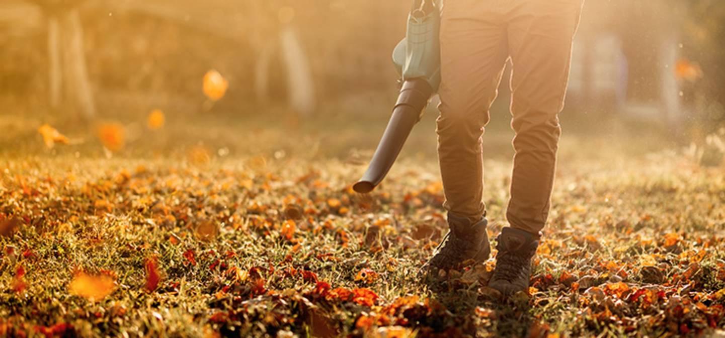 Herbst bedeutet: Buntes Herbstlaub