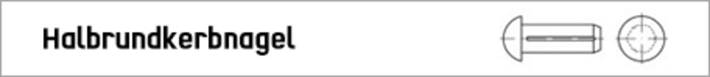TOOLCRAFT Halbrundkerbnagel