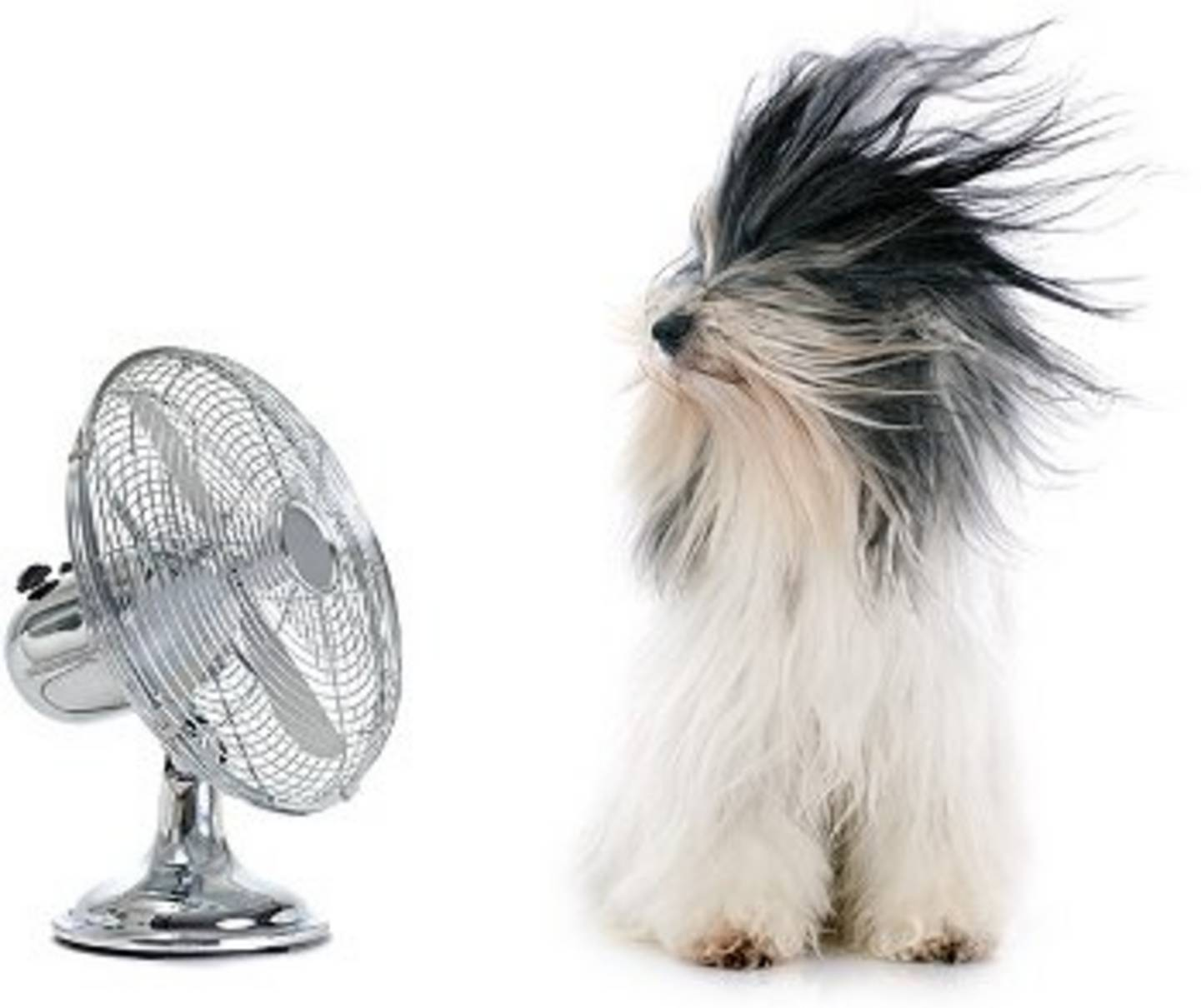 Dog in front of fan