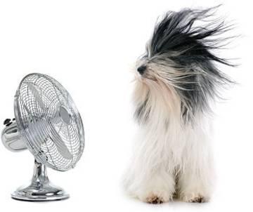 Hund vor Ventilator