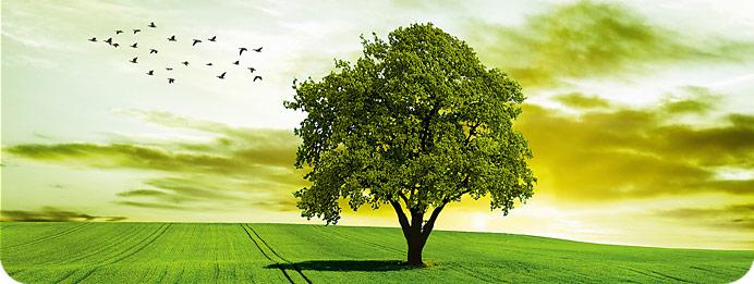 KMP – Unsere Umwelt im Fokus