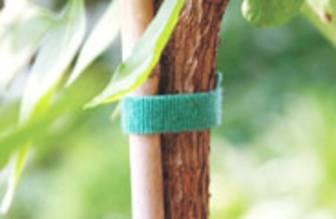 Pflanze mit Klettband an Bambusstange befestigt
