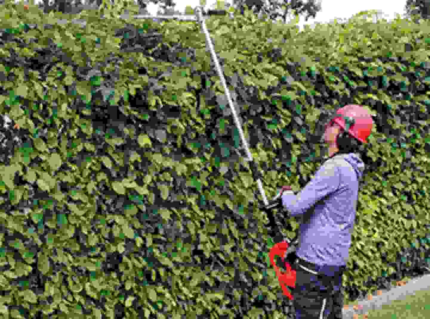 Baum- & Strauchpflege