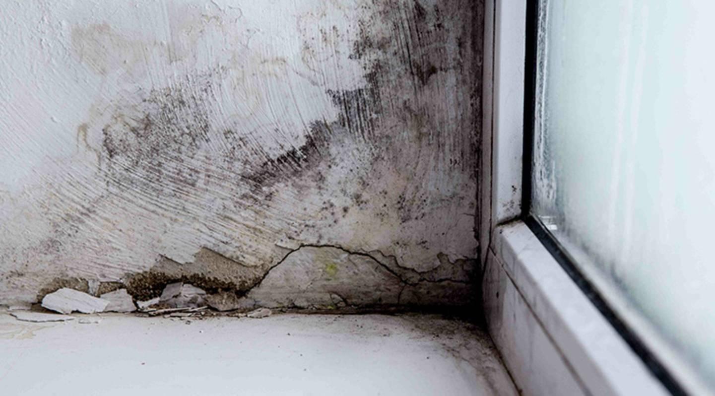 Folgen von Wärmebrücken - Feuchtigkeit und Schimmenlbildung