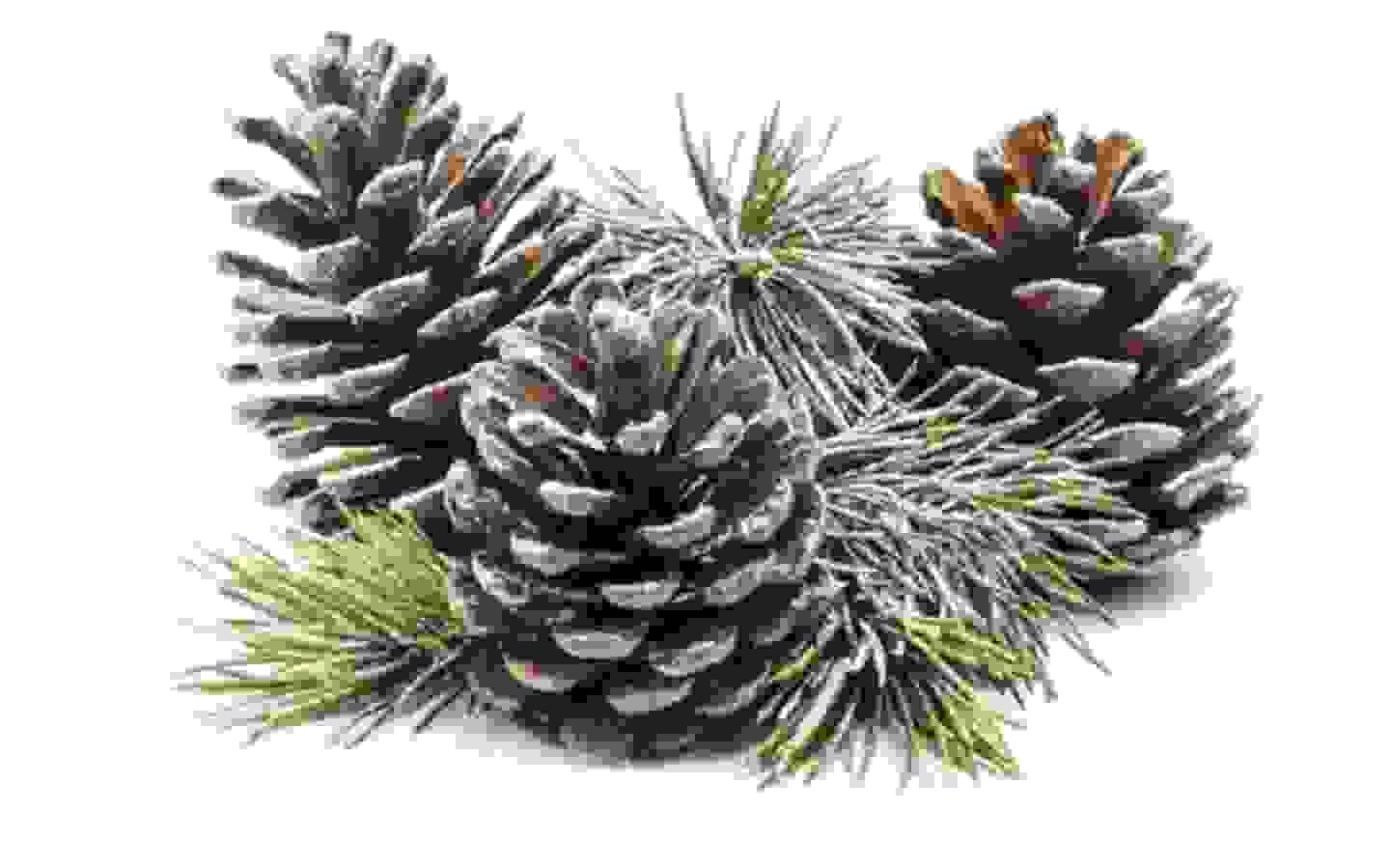 Weihnachtsdekorationen - Zu den Produkten »