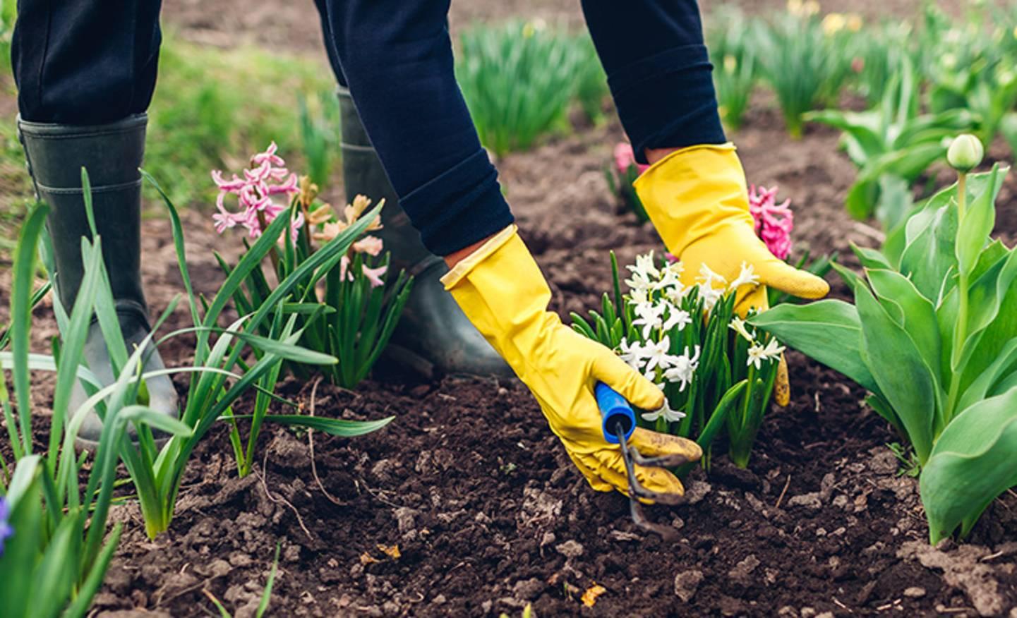 Voir tous les outils de jardinage »