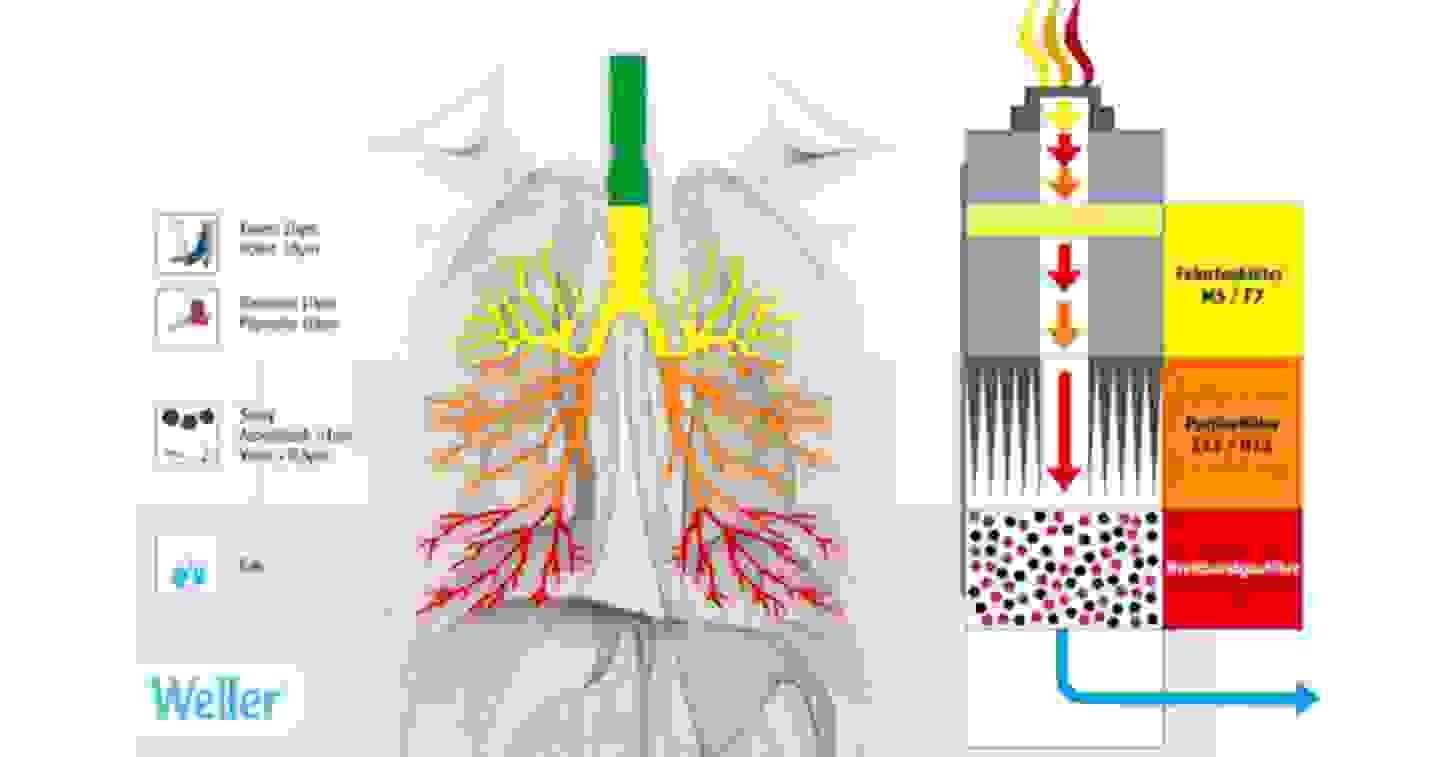 Action des particules sur les poumons